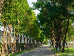 มัณฑนา พุทธมณฑล สาย 2 - บางแวก (Mantana Bhuddhamonthon Sai 2 - Bangwag) ภาพที่ 2/4