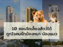 10 คอนโดเลี้ยงสัตว์ได้ ถูกใจคนรักน้องหมา น้องแมว